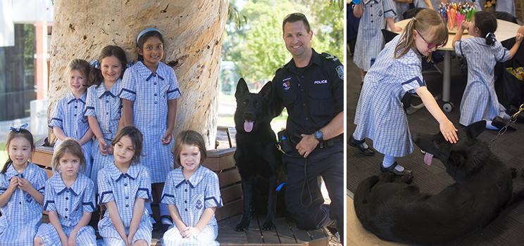 W11 Police Dog