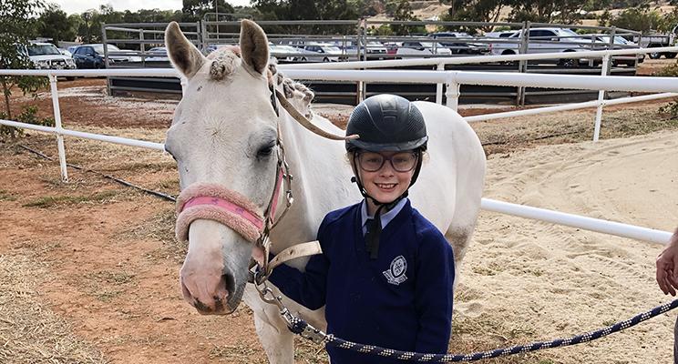 W6 - Equestrian